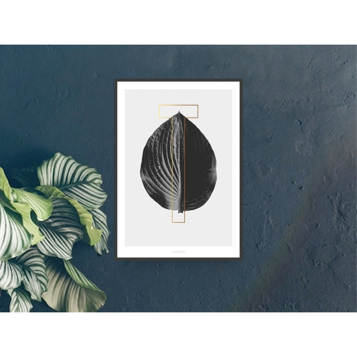 typealive / ABC Plants - T