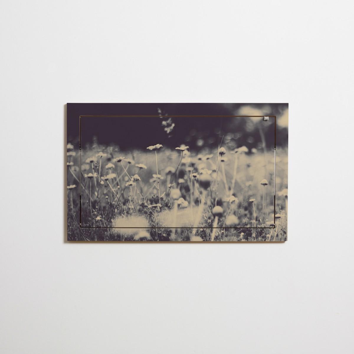 Fläpps Sekretär/in – Wild and Free by Ingrid Beddoes
