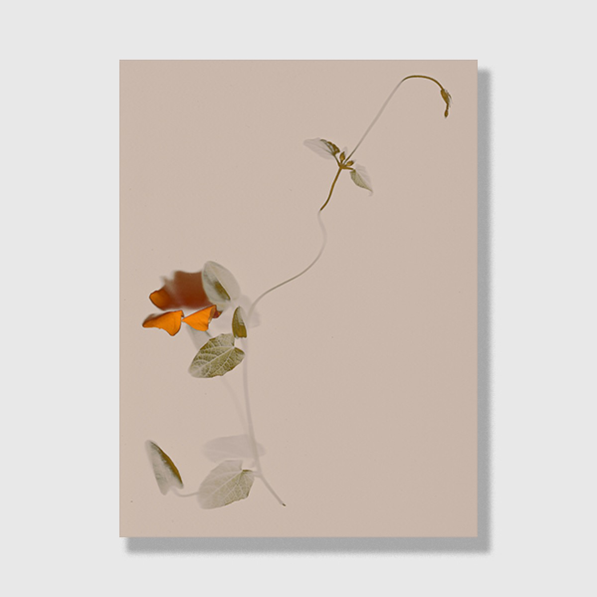 """ZEITLOOPS """"Floralis II"""", Posterprint 30x40 cm"""
