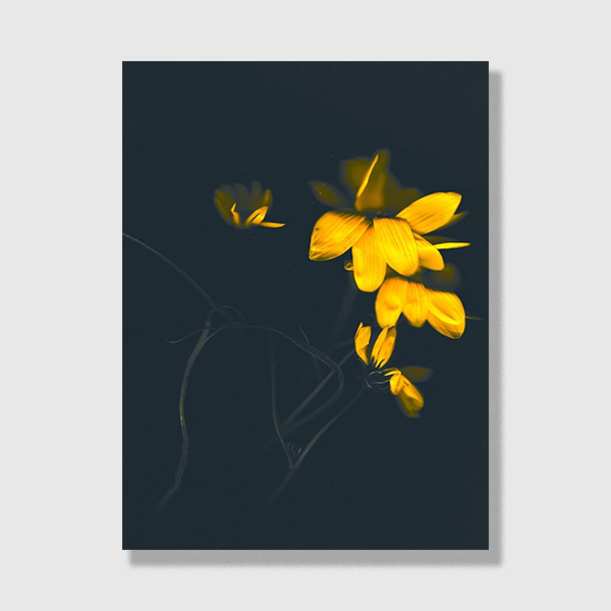 "ZEITLOOPS ""Floralis V"", Posterprint 30x40 cm"