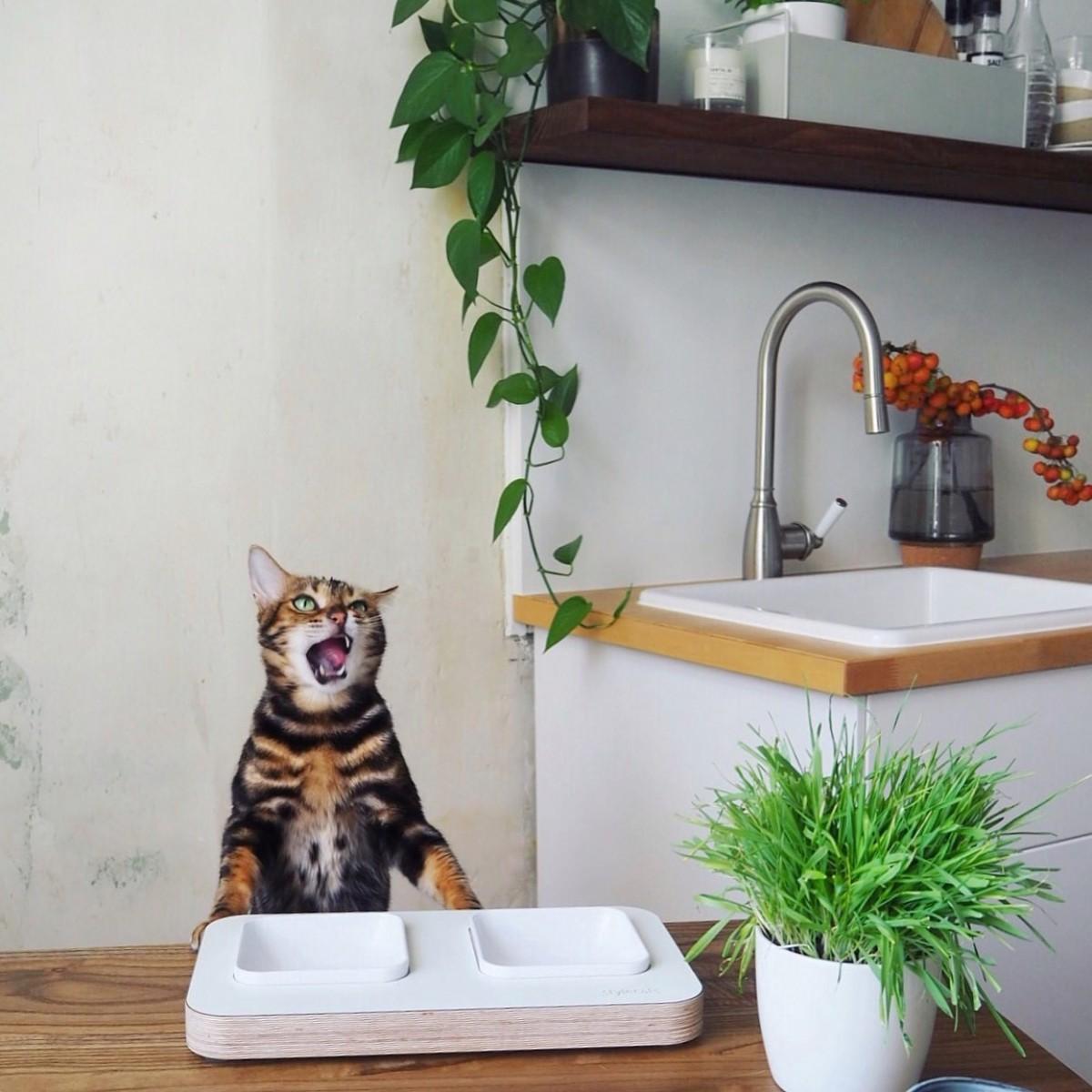 stylecats Futternapf CLASSY