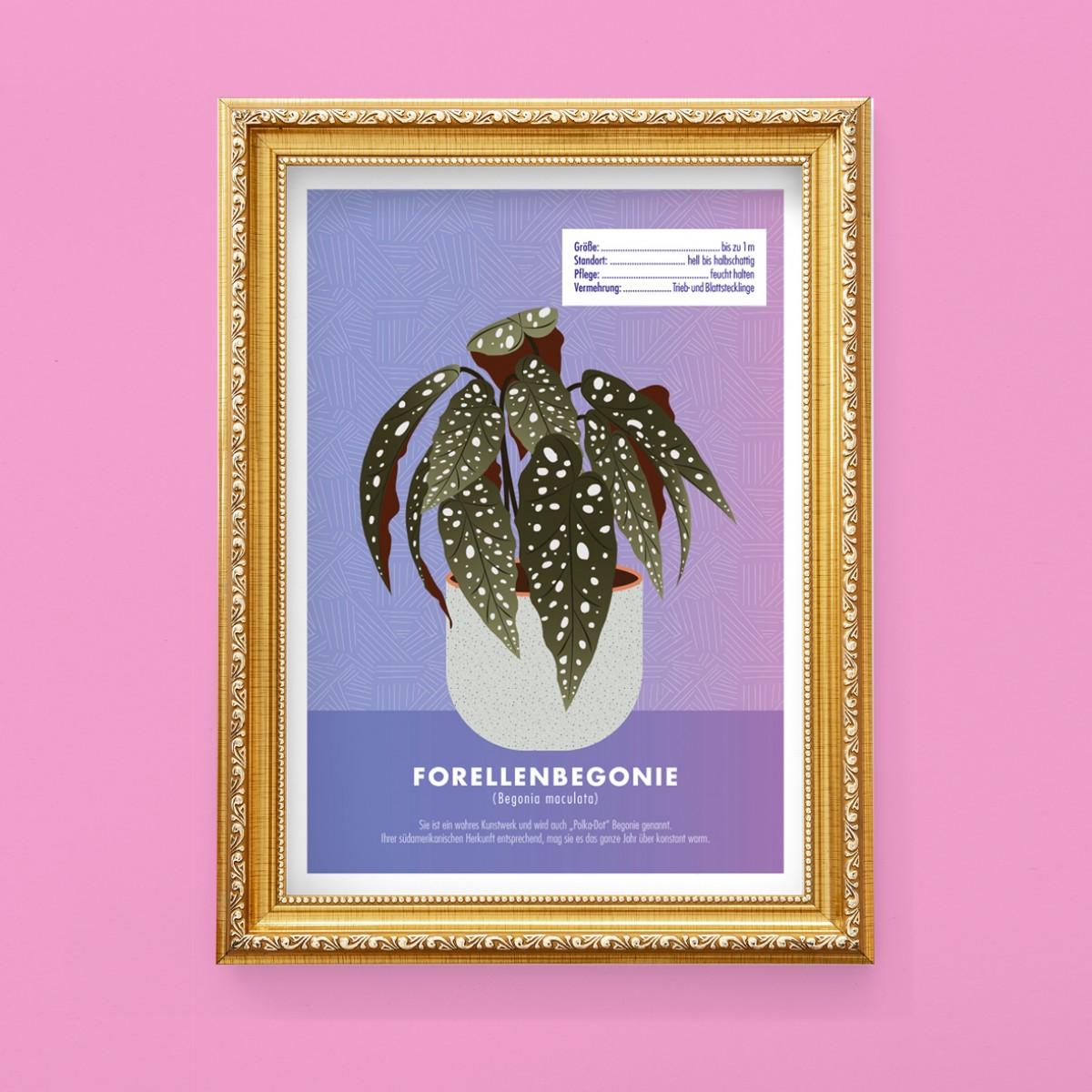 "Hey Urban Monkey - A4 Poster - ""Begonie Maculata"""