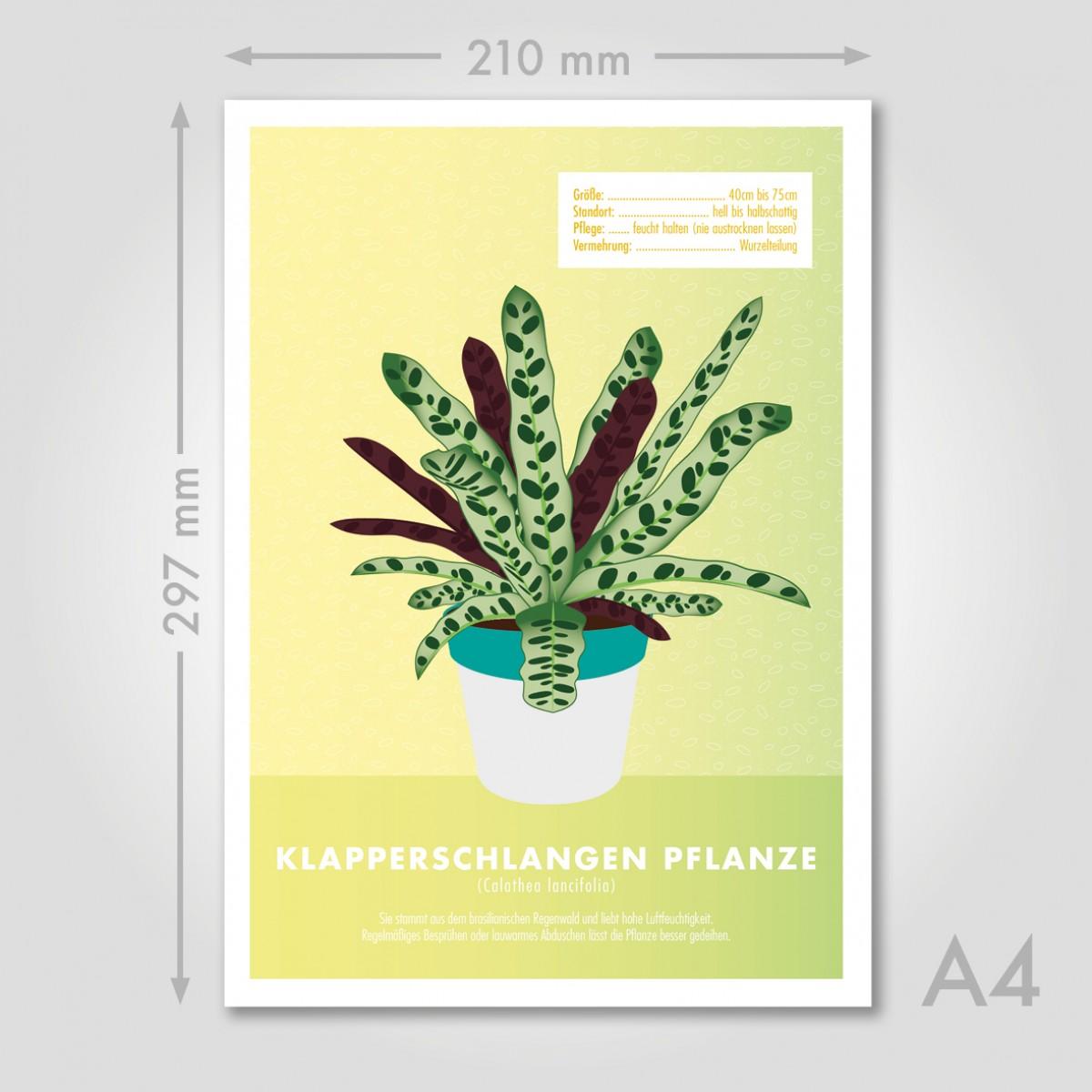 "Hey Urban Monkey - A4 Poster - ""Klapperschlangen Pflanze"""