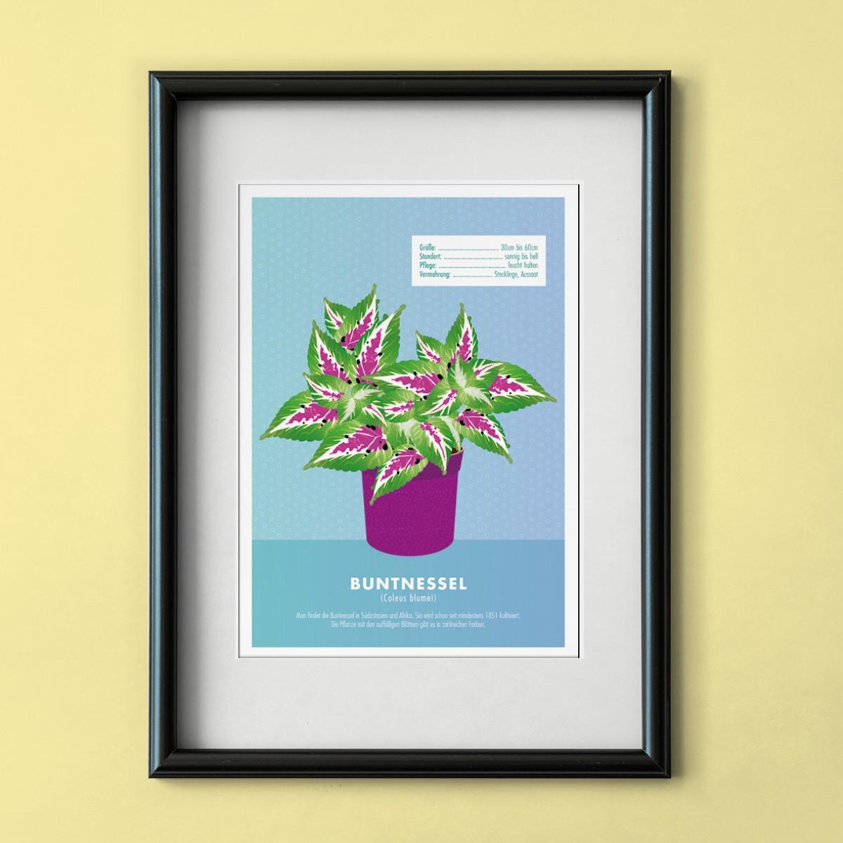 "Hey Urban Monkey - A4 Poster - ""Coleus blumei"""
