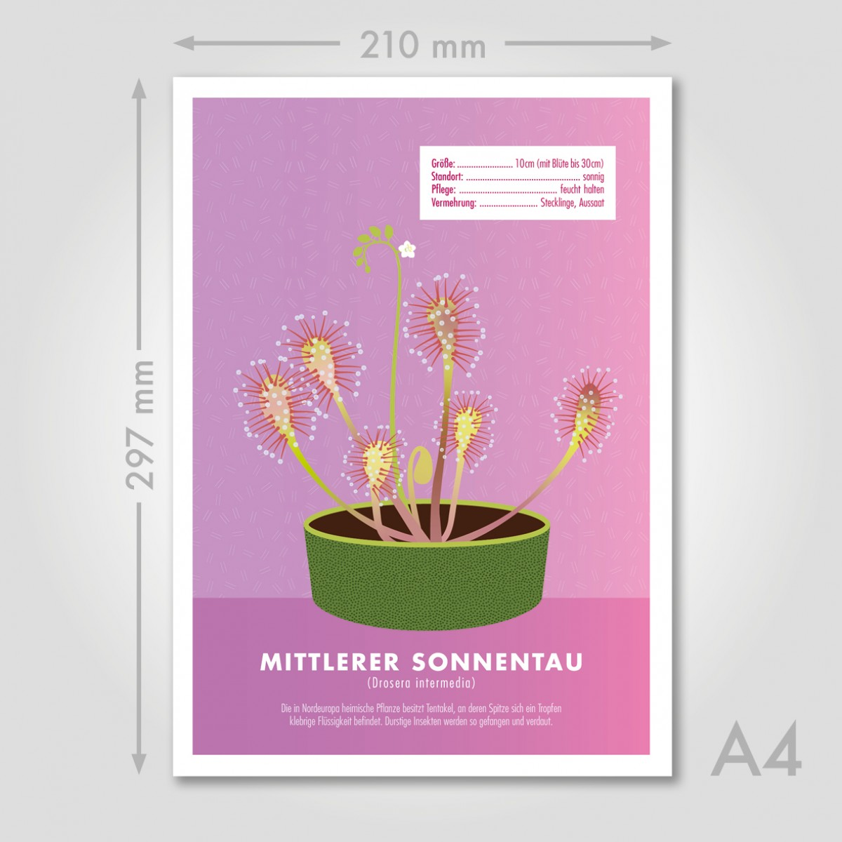 """Hey Urban Monkey - A4 Poster - """"Sonnentau"""""""