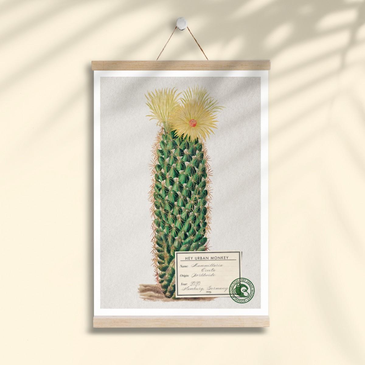 "Hey Urban Monkey - A4 Poster - ""Mammillaria Erecta"""