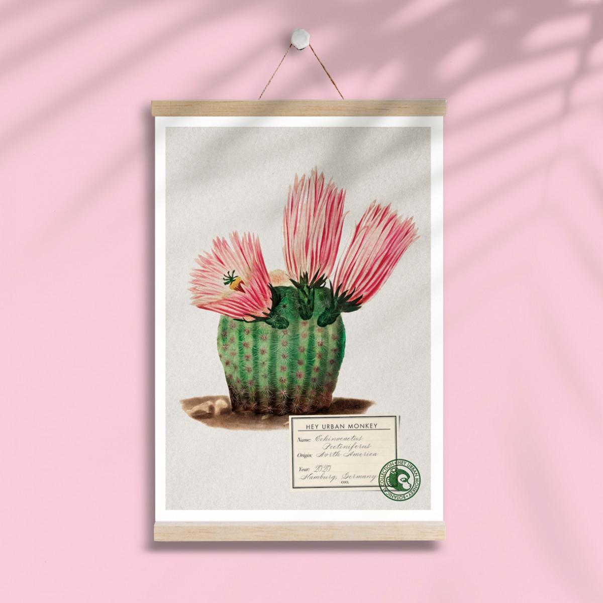 "Hey Urban Monkey - A4 Poster - ""Echinocactus Pectiniferus"""