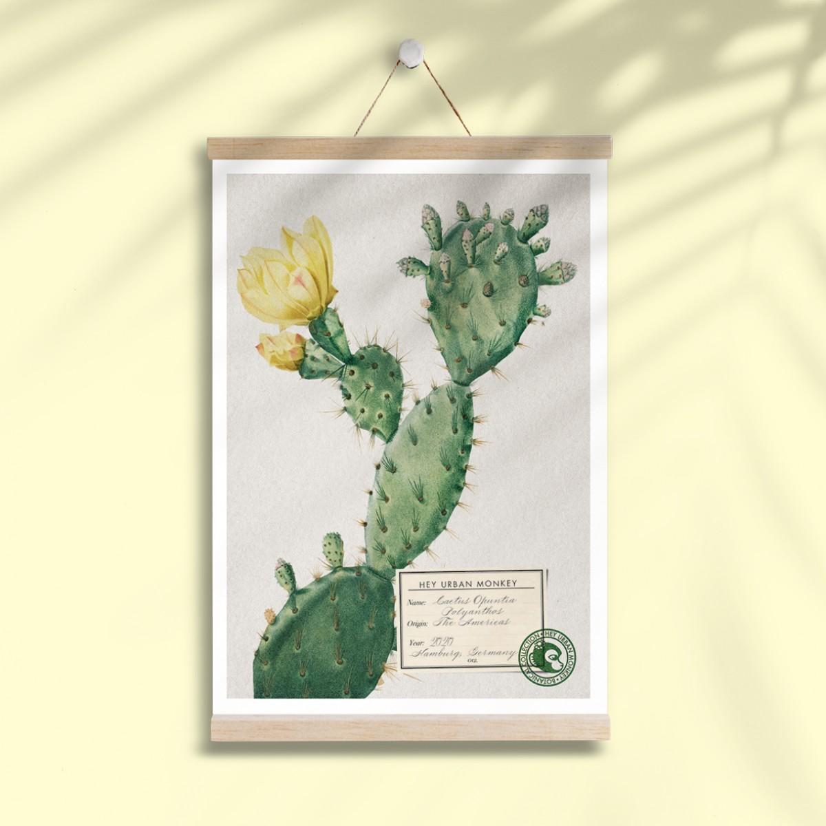 "Hey Urban Monkey - A4 Poster - ""Cactus Opuntia Polyanthos"""