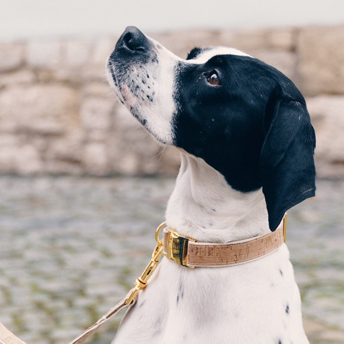 Hundehalsband IVY