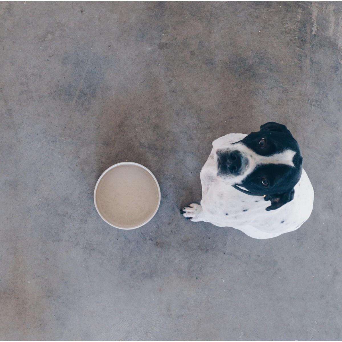 4 Nooks - Dog Bowl / Hundenapf JUNA - steingrau