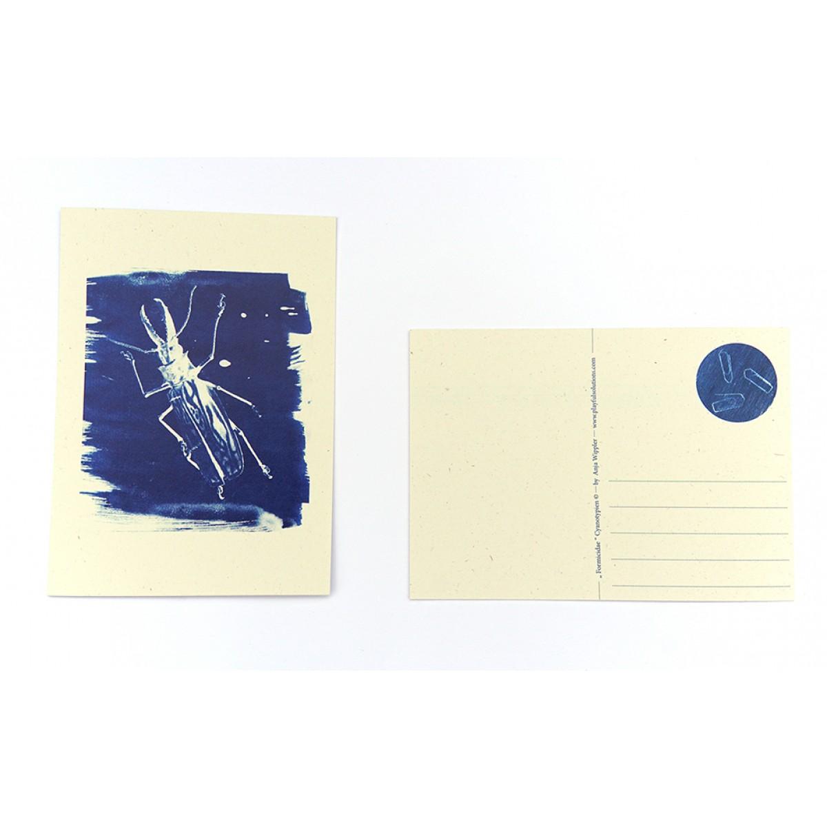 Postkartenset Cyanotypie Scarabaeus