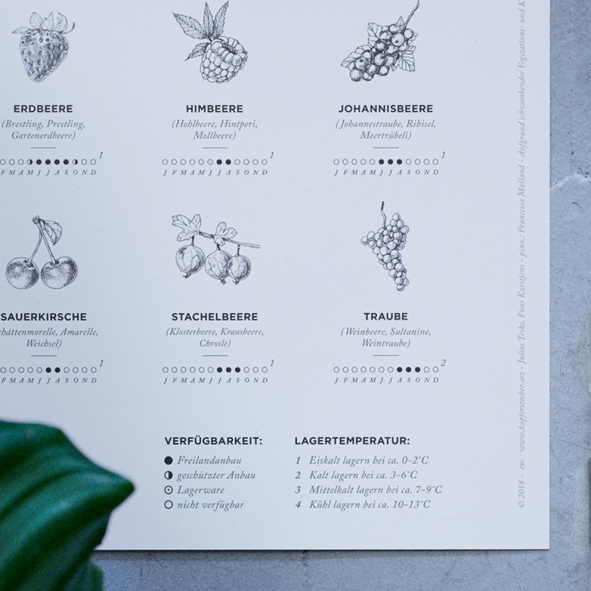 Kupferstecher.Art – Saisonkalender Obst & Gemüse Poster (erhältlich in Format A1, A2 und A3)