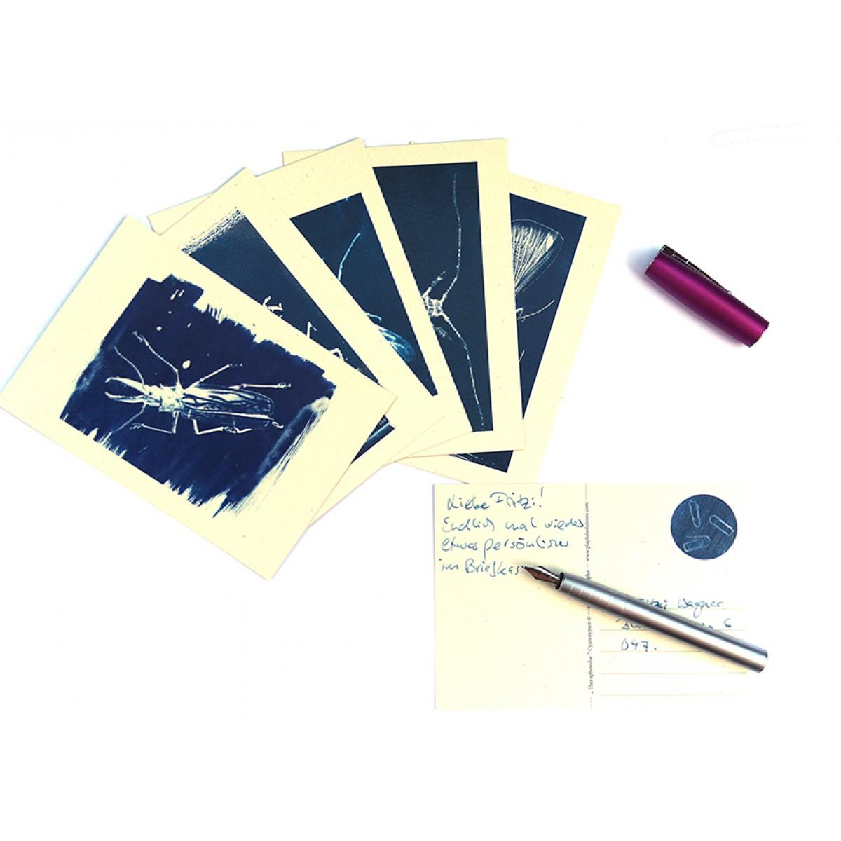 Postkartenset Cyanotypie Insekten