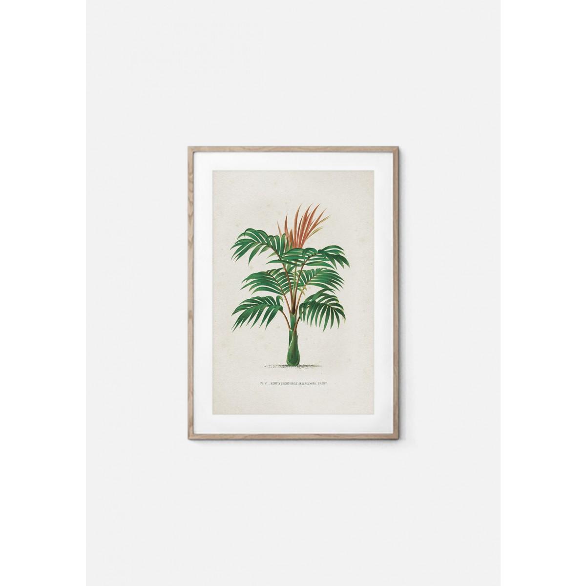 JOE MANIA / Vintage Artprint Poster / Kerchove - Les Palmiers 6