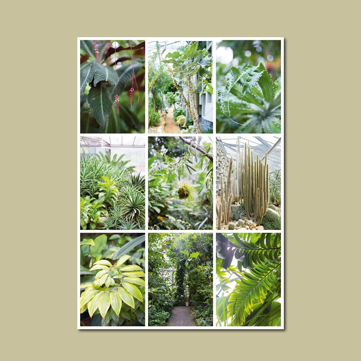 'Tropengewächse' limitierter Fotodruck auf Naturpapier, DIN A2, klimaneutral gedruckt / Ankerwechsel Verlag