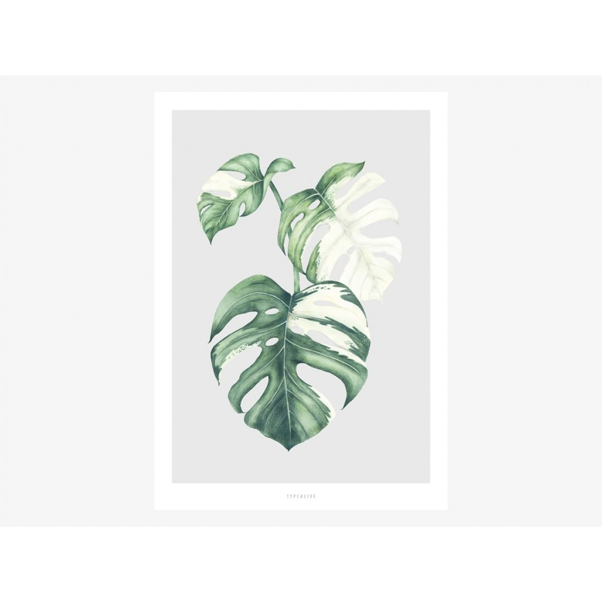 typealive / Tropical No. 5