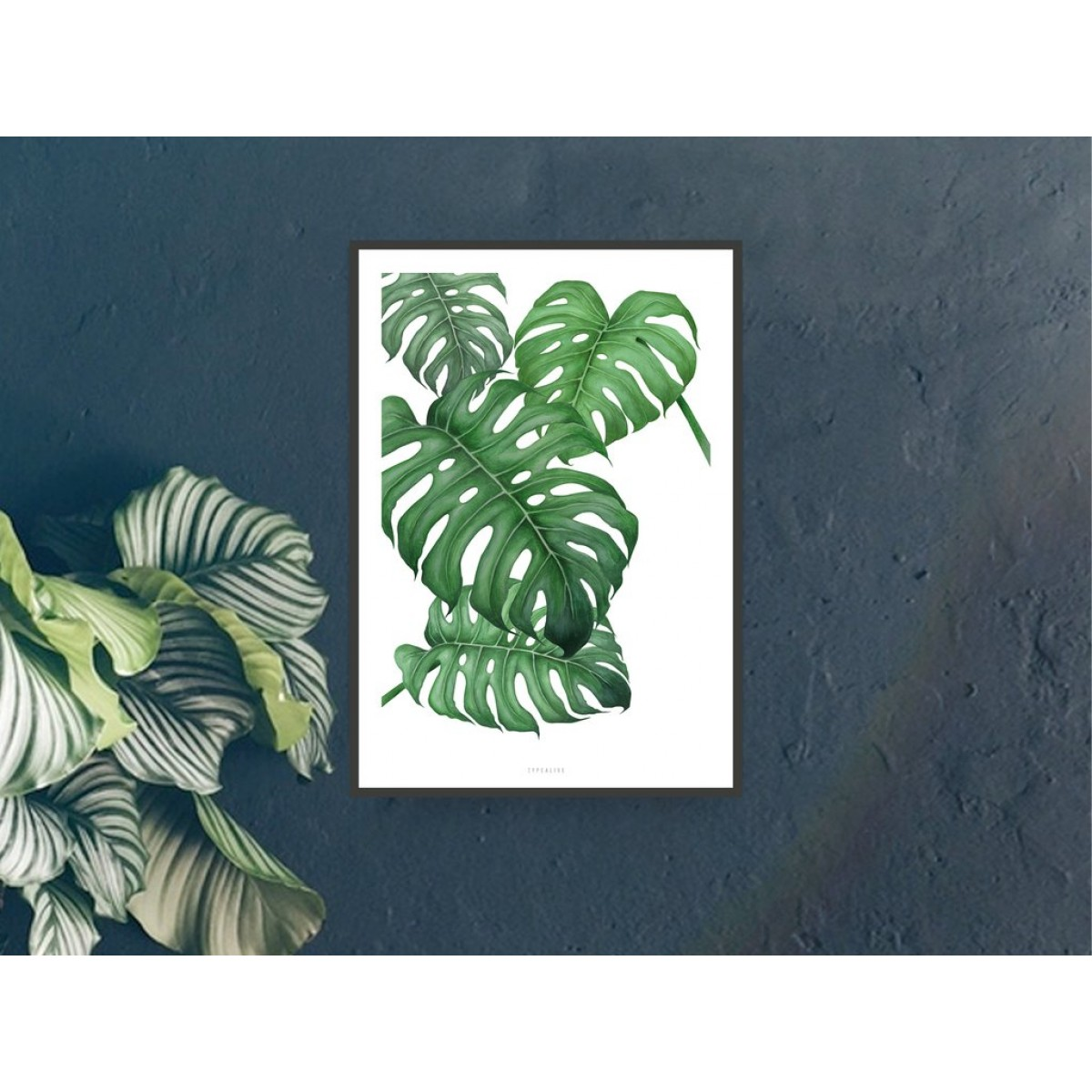 typealive / Tropical No. 2