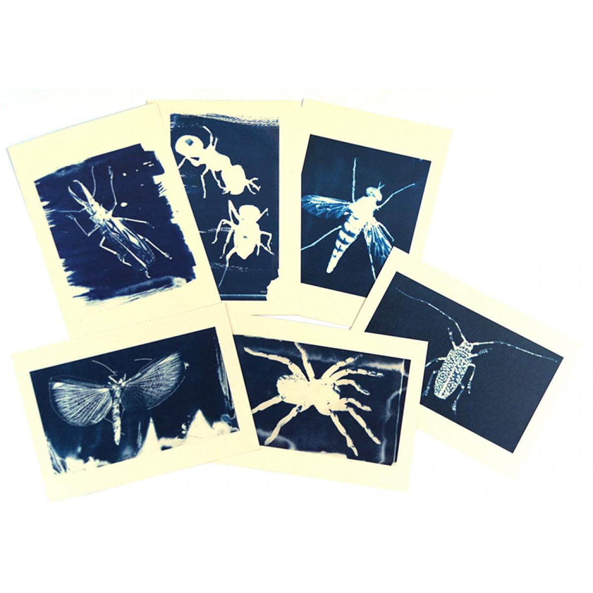 Postkartenset Cyanotypie Insekten von playfulsolutions