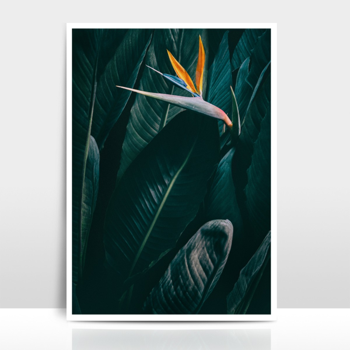 "Amy & Kurt Berlin A4 Artprint ""Bird of paradise"""