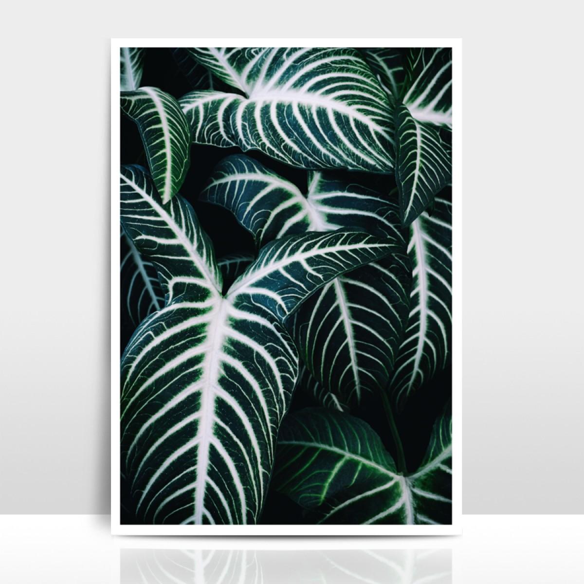 """Amy & Kurt Berlin A3 Artprint """"Jungle 2"""""""