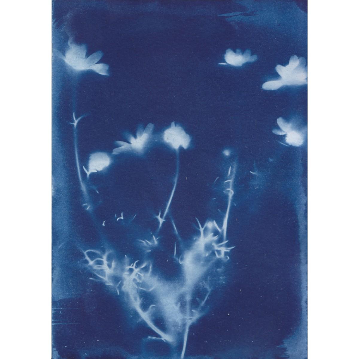 Anka Büchler, Floraler Blaudruck,Cyanotypie, Unikat, A6, Motiv 13