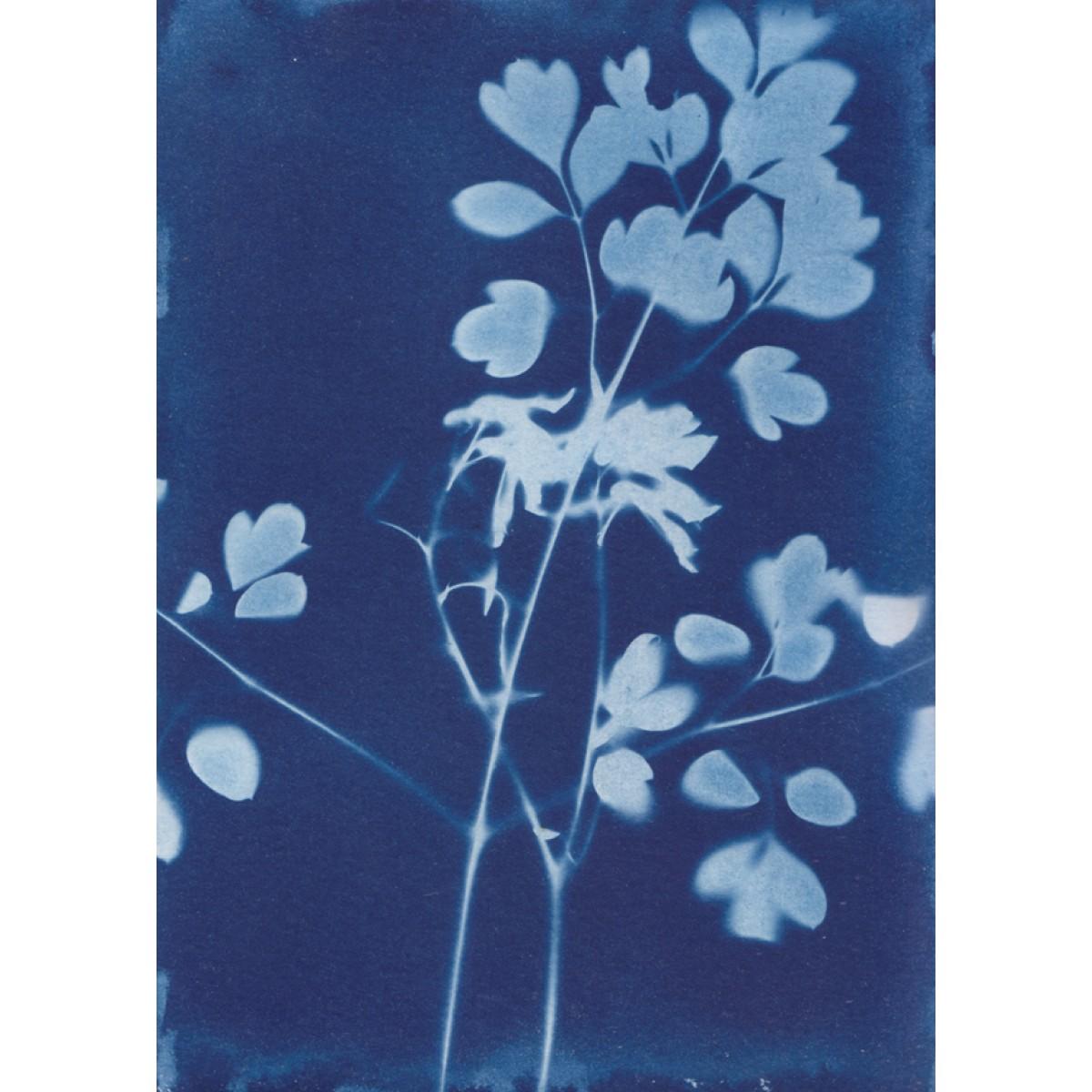Anka Büchler, Luzerne, Blaudruck,Cyanotypie, Unikat, A6, Motiv 20