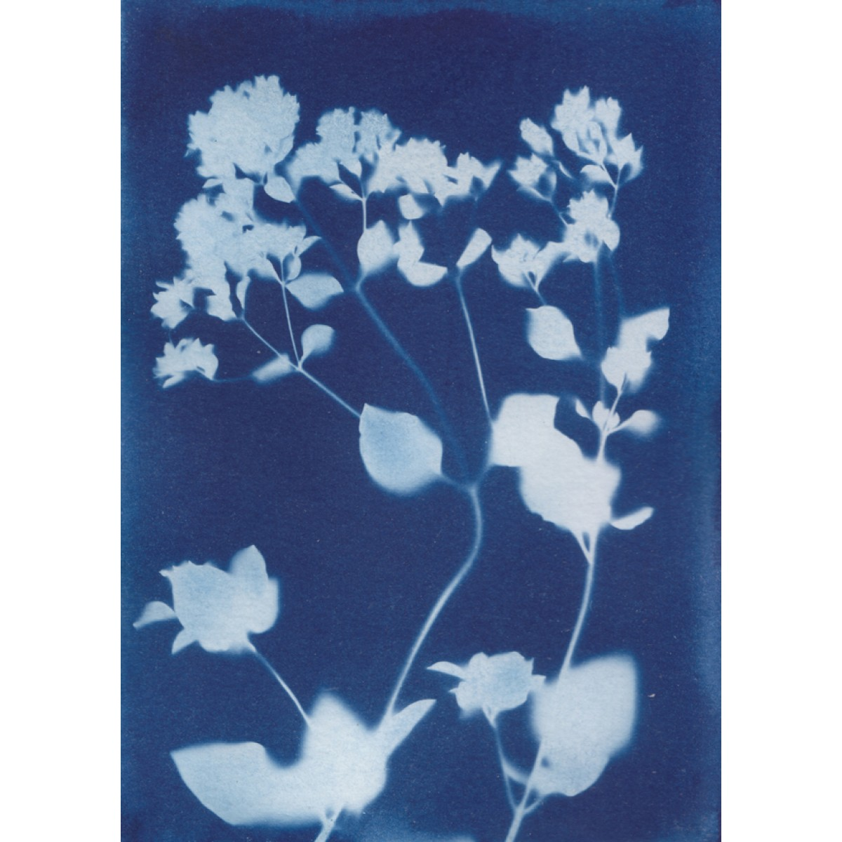 Anka Büchler, Floraler Blaudruck,Cyanotypie, Unikat, A6, Motiv 4