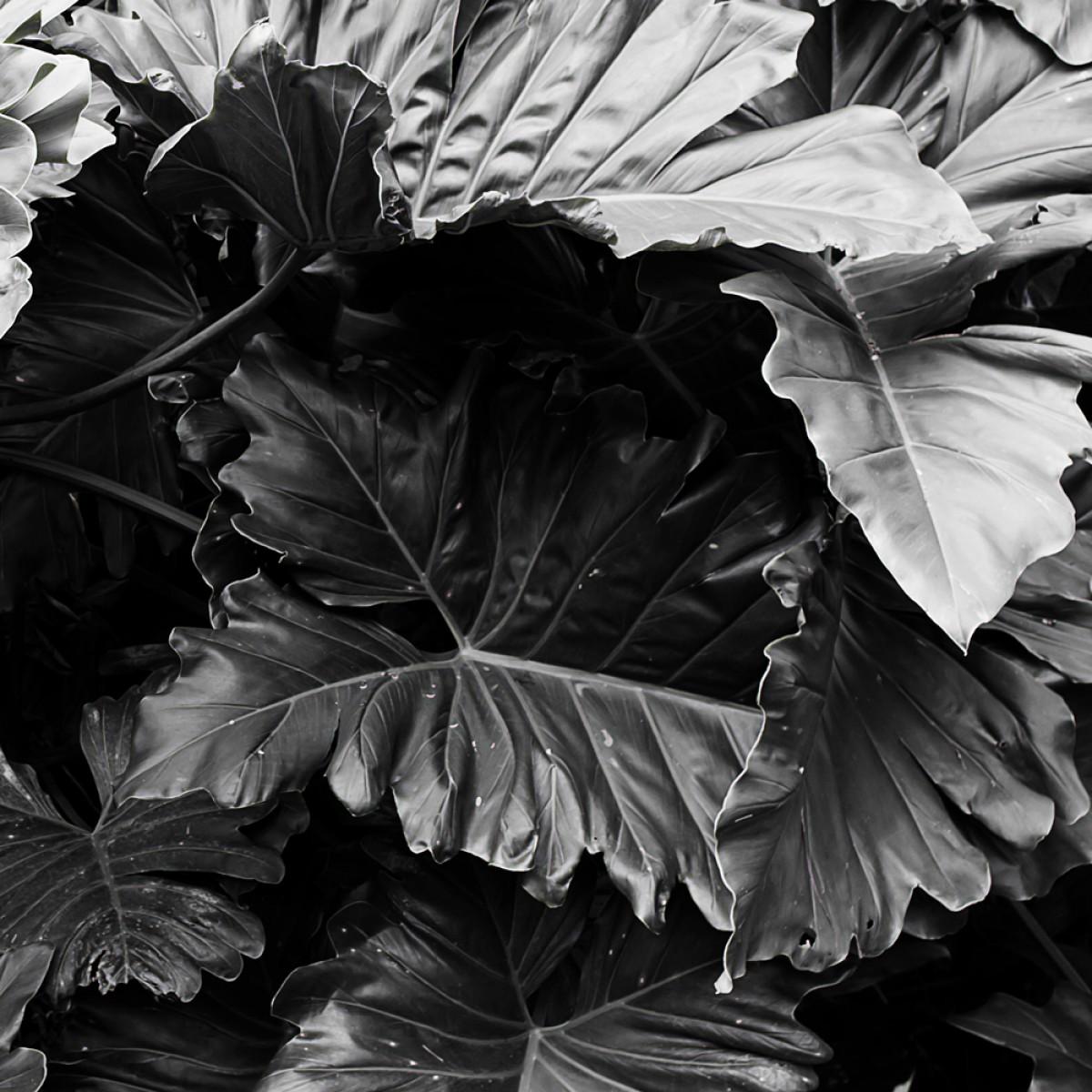 Botanical no. 3