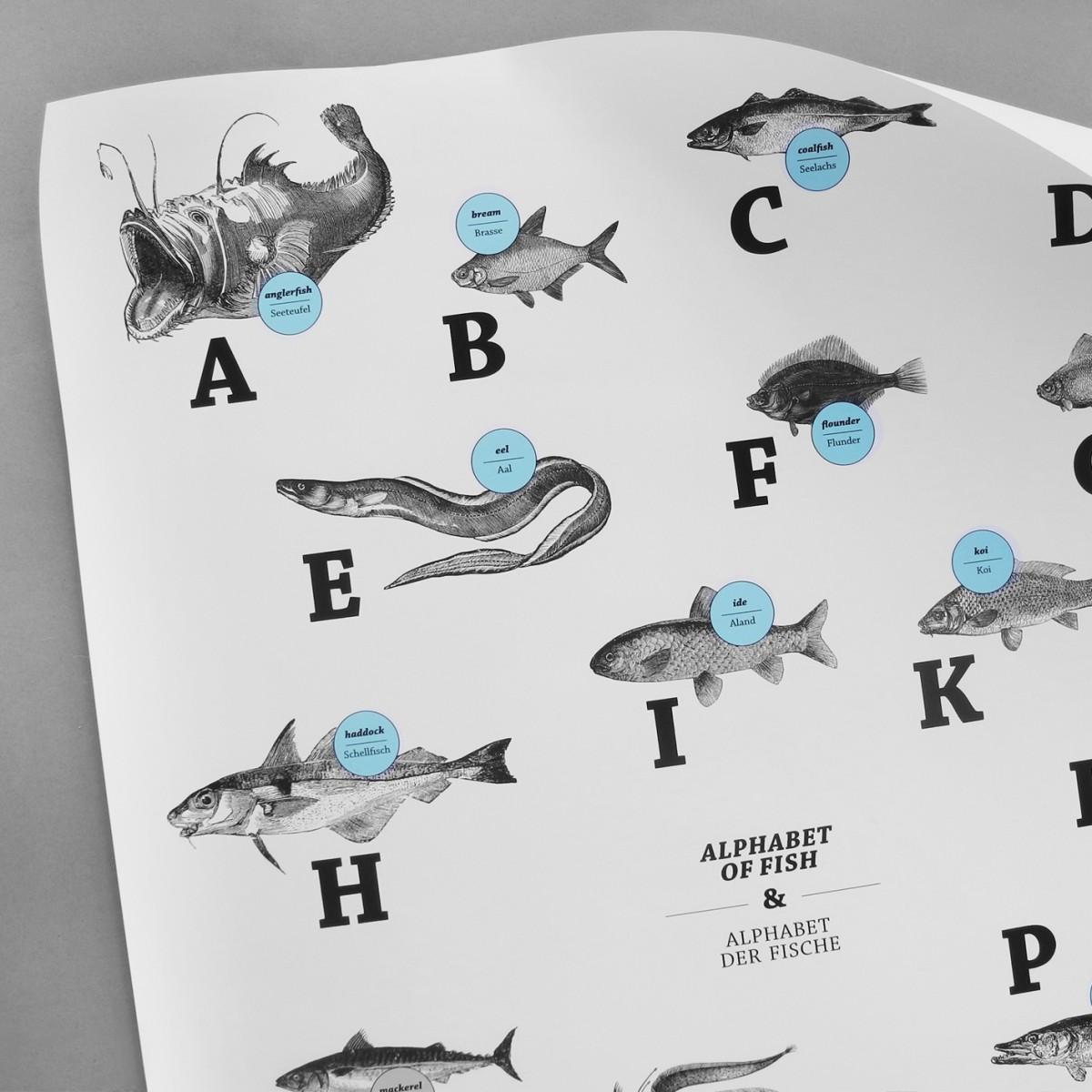 Poster, ABC der Fische / alphabet of fish in Deutsch/Englisch, DIN A1