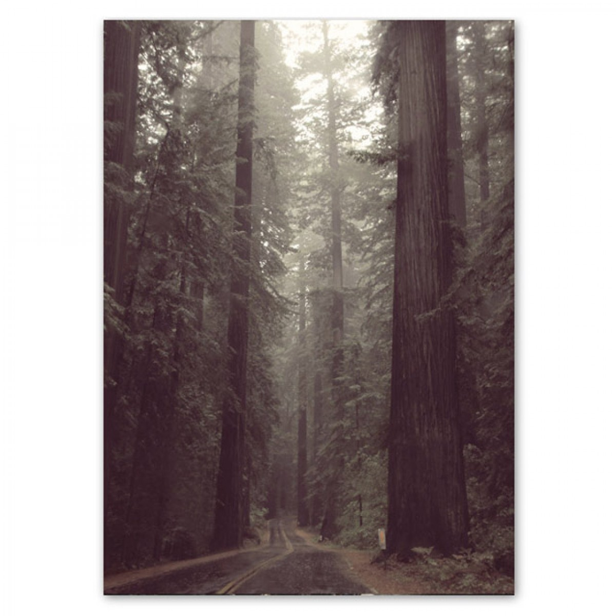 Human Empire Redwood Forest Poster (50x70cm)
