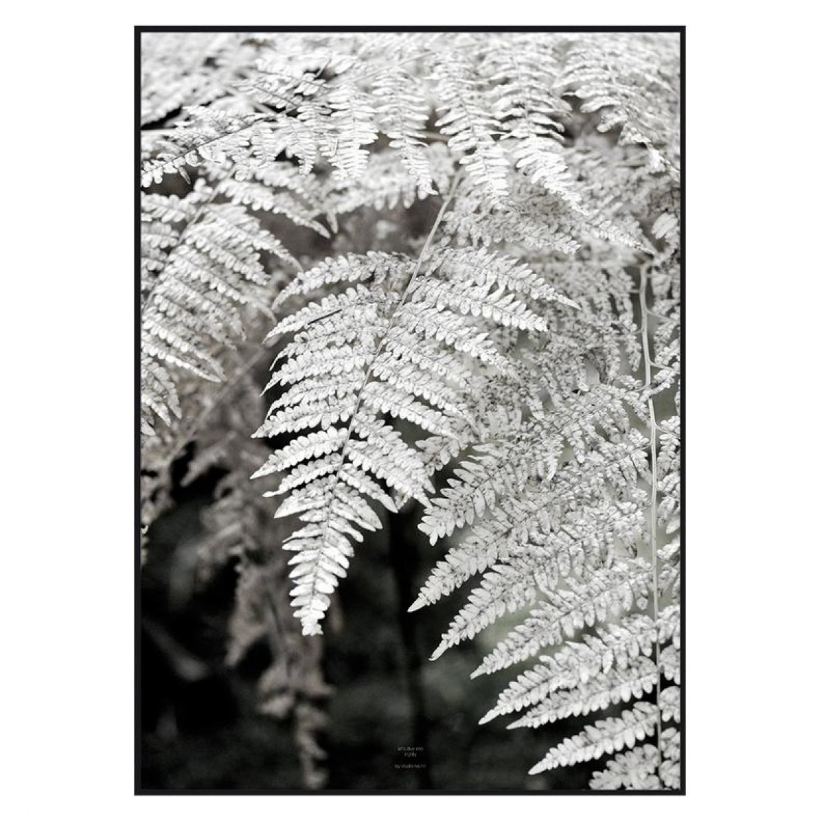 "nahili ARTPRINT / POSTER ""let´s dive into FERN"" schwarz weiß Farn Pflanzen Fotografie - Druck (DIN A1/A3 & 50x70cm)"