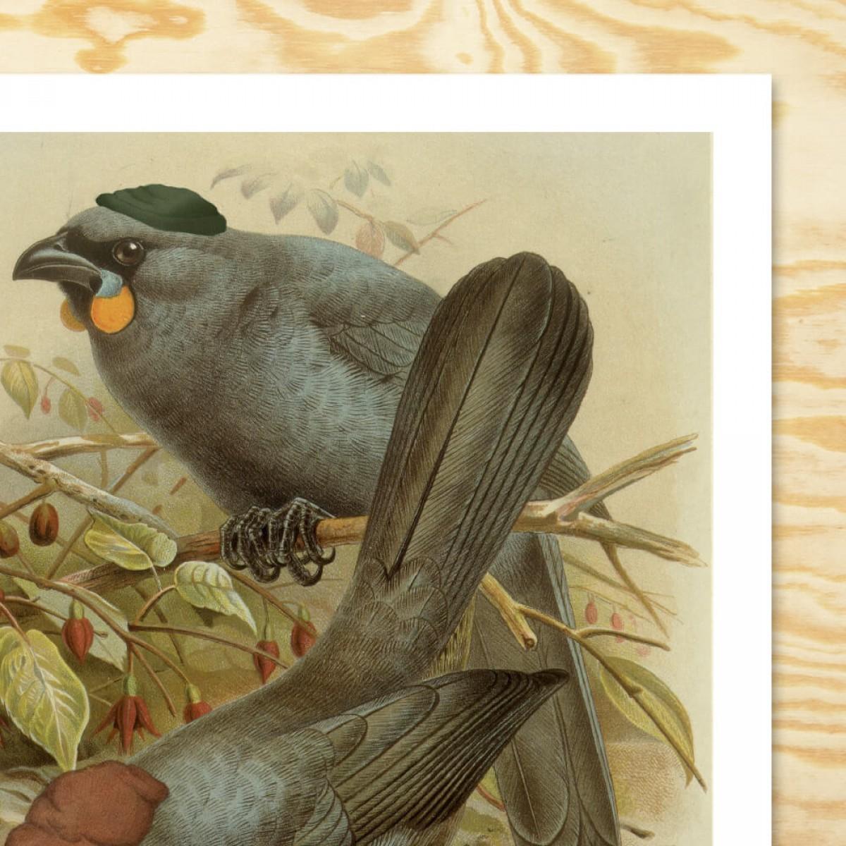 Chiara Tempel – Paradiesvögel #2 – Beaniekrähe – Poster A3 (297x420mm)