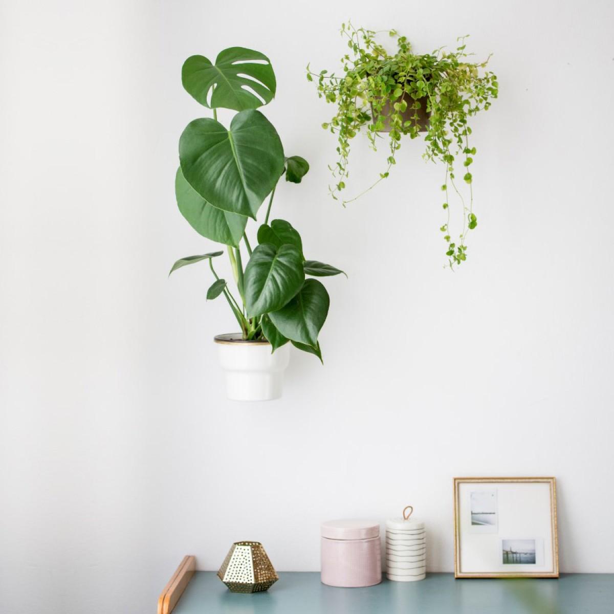 Planty Rings Wallplanter | universelle Wandhalterung für Pflanzen im Übertopf | Blumenampel für die Wand im minimalistischen Design | Urban Jungle | Vertikaler Garten | Material Messing | in 3 Größen erhältlich