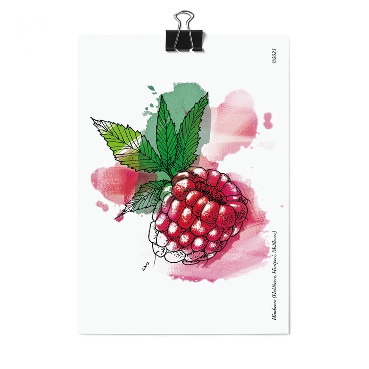 Postkartenset, 16 Obst und Gemüse Postkarten von Kupferstecher.Art