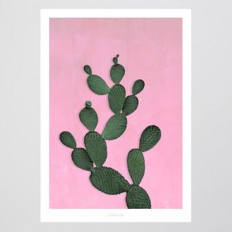 typealive / Kaktus No. 3