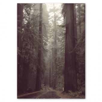 Redwood Forest Poster (50x70cm)