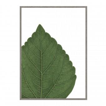 and closer HIBISCUS - green Artprint A3, 50x70, A1 Poster