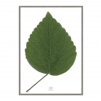 look closer HIBISCUS - green Artprint Poster A3 / A1 / 50x70