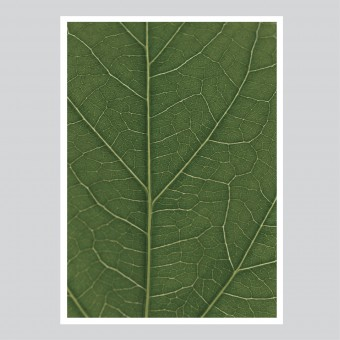 look real close HIBISCUS - green Artprint A3, 50x70, A1 Poster