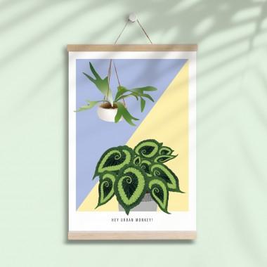 "Hey Urban Monkey - A4 Poster - ""Begonia/Staghorn"""