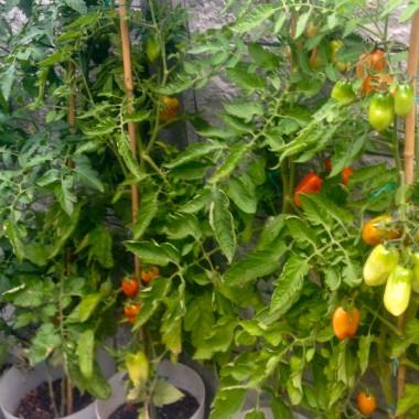 Gabys Grüner Garten traumhafte TomatenMarmelade (250g)