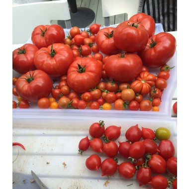 Gabys Grüner Garten Köstlicher Ketchup 350ml