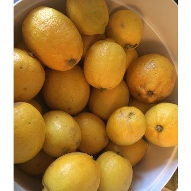 Gabys Grüner Garten zauberhaftes ZitronenÖl