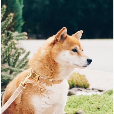 4 Nooks – Hundehalsband IVY