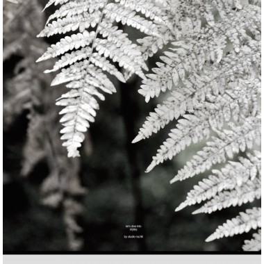 let´s dive into FERN  - A1 Artprint - Poster