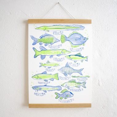 KLEINWAREN / VON LAUFENBERG Set / Heimische Fische Poster + Posterleiste Eiche A3