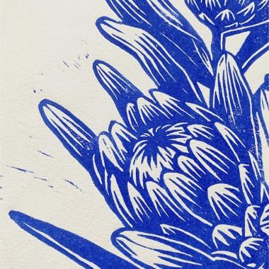 Juliana Fischer - Protea - Linoldruck - ultramarinblau - 22,8 x 30,6 cm
