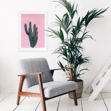 typealive / Kaktus