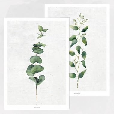 designfeder   Poster Pflanze No.1+2