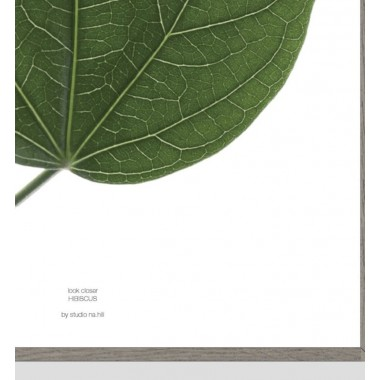 "nahili ARTPRINT / POSTER ""look closer HIBISCUS - green leaf"" (DIN A1/A3 & 50x70cm) Blatt Botanic Fotografie"
